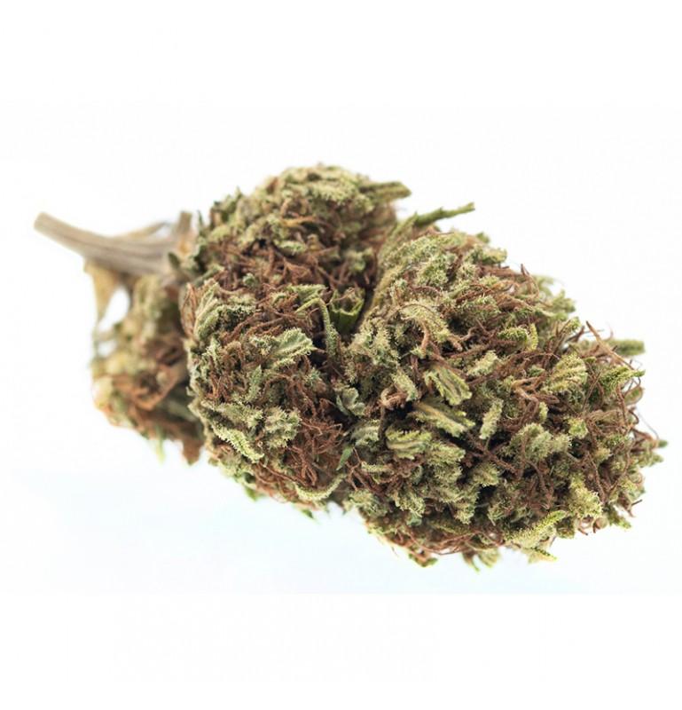Marijuana light Balance | Zacà