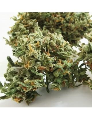 Marijuana Light Karma|Zacà