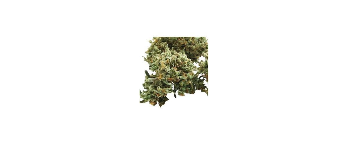 Come e dove si può acquistare infiorescenze di Marijuana Legale?